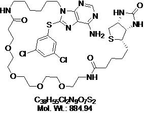 GLXC-04862
